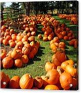 Pumpkin - Happy Thanksgiving Acrylic Print