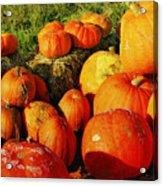 Pumpkin Meeting Acrylic Print