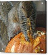 Pumpkin On The Menu Acrylic Print