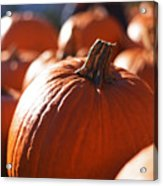 Pumpkin Patch Farm Acrylic Print
