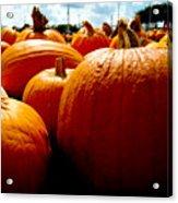 Pumpkin Patch Piles Acrylic Print