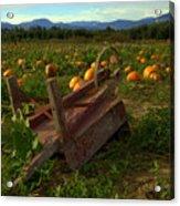 Pumpkin Patch. Acrylic Print