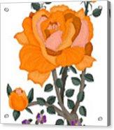 Pumpkin Rose And Violas Acrylic Print