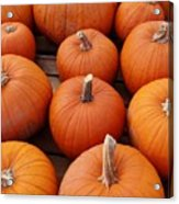 Pumpkin Time Acrylic Print
