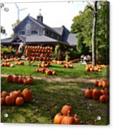 Pumpkins In Martha's Vineyard Farm Acrylic Print