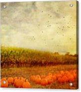 Pumpkins In The Corn Field Acrylic Print by Kathy Jennings