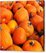 Pumpkins Acrylic Print