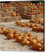 Pumpkins On Bales Acrylic Print