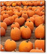Pumpkins Waiting For Homes Acrylic Print