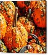 Pumpkins With Warts Acrylic Print