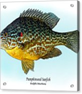 Pumpkinseed Sunfish Acrylic Print by Ralph Martens
