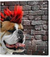 Punk Bully Acrylic Print