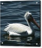 Punk Pelican - Side View Acrylic Print