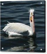 Punk Pelican Acrylic Print