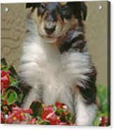 Pup In The Flowers Acrylic Print