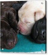 Puppies Dreams 2 Acrylic Print