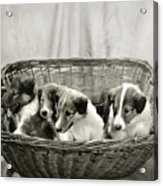 Puppies Of The Past Acrylic Print