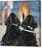 Puppies On The Beach Acrylic Print by Camilla Brattemark