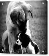 Puppies Acrylic Print by Susie Weaver