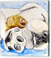 Puppy Dreams Acrylic Print