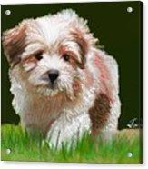 Puppy In High Grass Acrylic Print