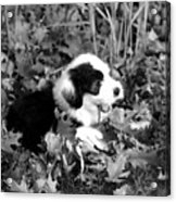 Puppy In The Leaves Acrylic Print