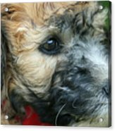 Puppy Love I Acrylic Print