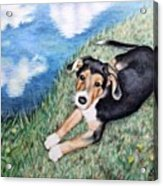 Puppy Max Acrylic Print