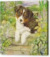 Puppy On The Step Acrylic Print