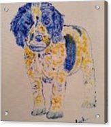 Puppy Stare Acrylic Print