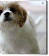 Puppy Sunshine Acrylic Print