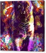 Puppy Sweet Cute Dog Young Animal  Acrylic Print