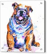 Puppy Acrylic Print