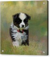 Puppyhood 1 Acrylic Print