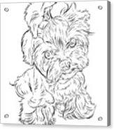 Puppy_printfilecopy Acrylic Print