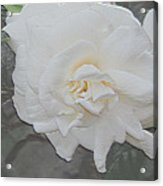 Pure And Pleasant Acrylic Print
