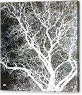 Pure Energy- Lightning Tree Acrylic Print