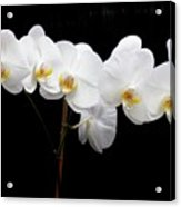 Pure Orchid Acrylic Print
