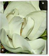Pure White Fragrant Beauty Acrylic Print
