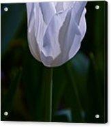 Pure White Petals Acrylic Print