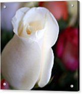Pure White Rose Bud Acrylic Print