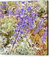 Pure Wild  Purple Acrylic Print