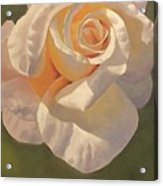 Purity Rose Acrylic Print