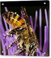 Purpel Nectar Acrylic Print