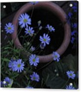 Purple And Blue Flowers Acrylic Print