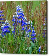 Purple And Grass Acrylic Print