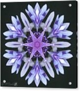 Purple And White Frosted Queen Mandala Acrylic Print