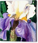 Purple And White Iris Acrylic Print by Janis Grau