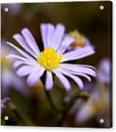 Purple And Yellow Flower Acrylic Print