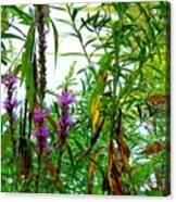 Purple And Yellow Acrylic Print